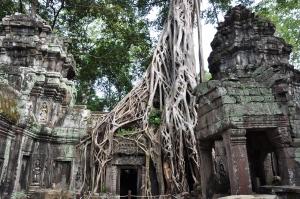 Džiunglės ir šventyklos